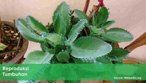 reproduksi tumbuhan