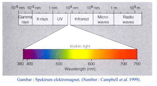 Panjang gelombang cahaya tampak